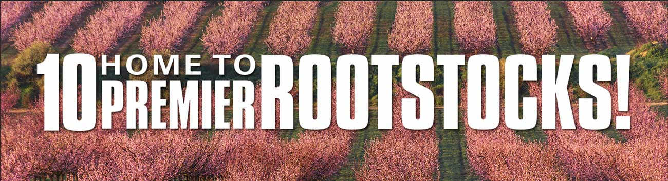 Home to 10 Premier Rootstocks