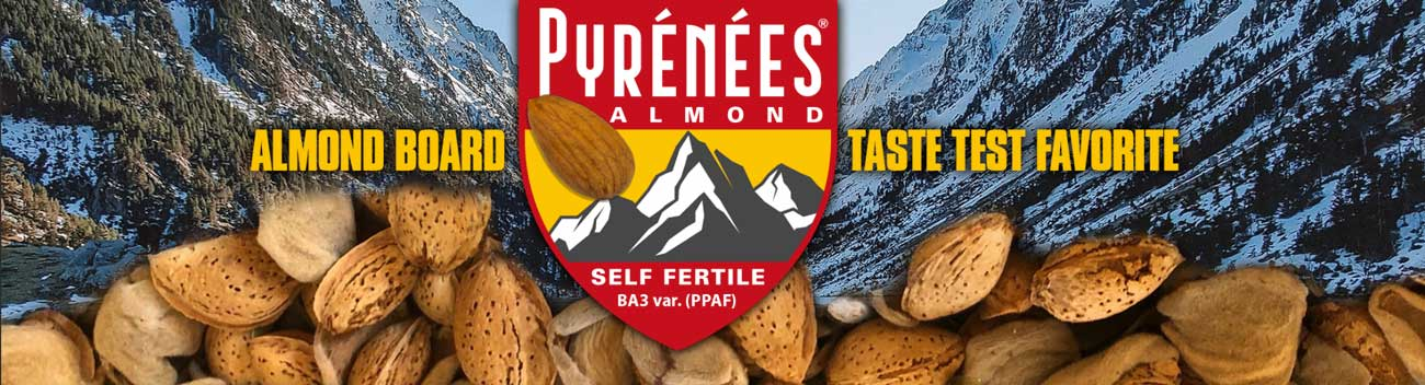 Pyrenees: Almond Board Taste Test Favorite