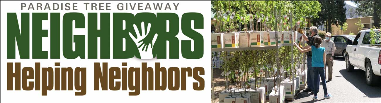 Paradise Tree Giveaway: Neighbors Helping Neighbors