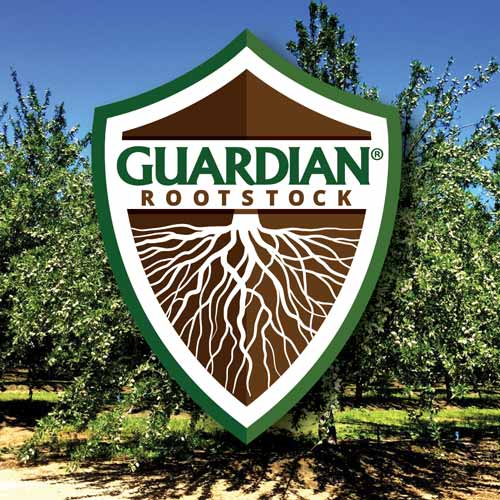 Guardian Rootstock