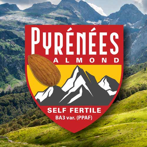 Pyrenees Self Fertile Almond