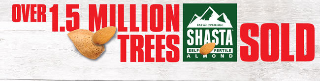 Over 1.5 Million Shasta Self Fertile Almond Trees Sold