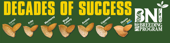 BNI Nut Breeding Program - Decades of Success